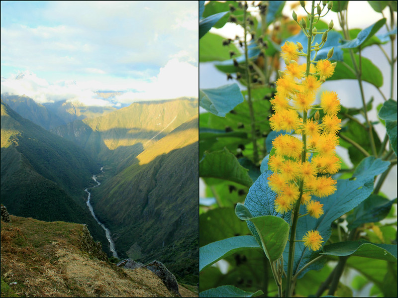 Intipata views and flowers