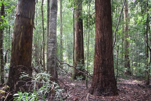 tall moist forest