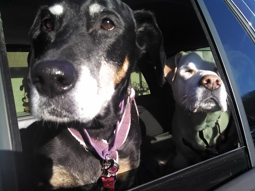 Lola and Zeus both loved car rides