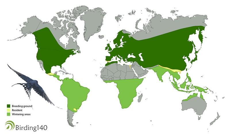 Barn Swallow Map