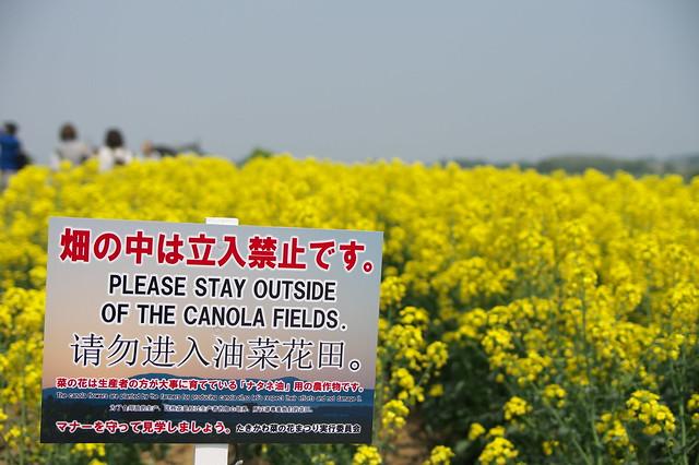 20160521滝川市 菜の花_16