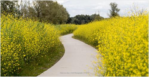 canon color cvk europe flevoland landscape nationalpark nature netherlands oostvaardersplassen summer lelystad nederland nl path yellow