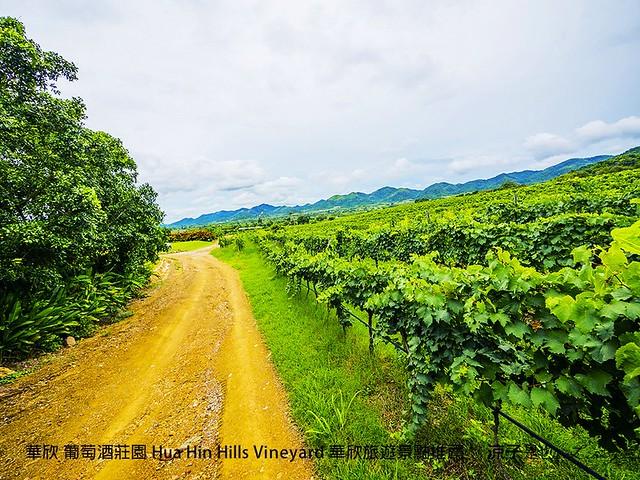 華欣 葡萄酒莊園 Hua Hin Hills Vineyard 華欣旅遊景點推薦 49