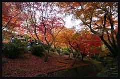 日本京都[南区]-東福寺.43