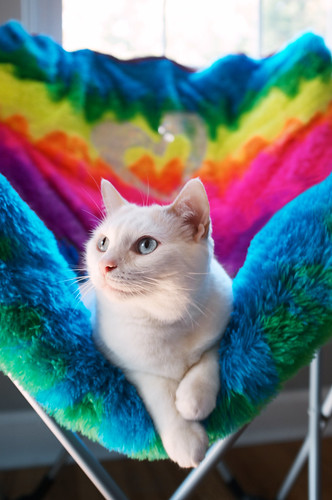 Hippie cat.