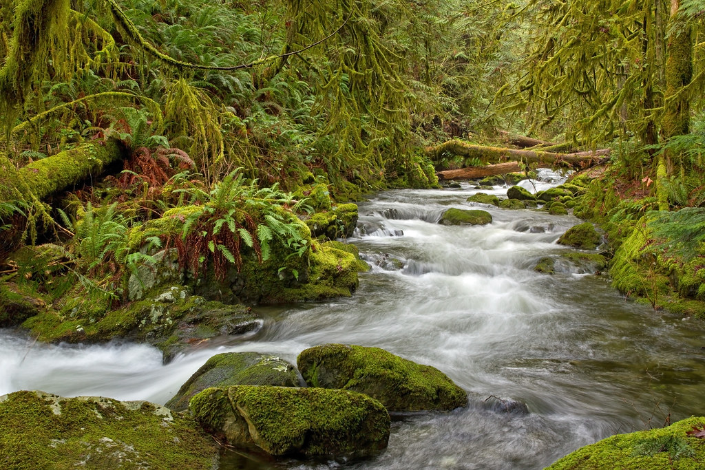 Rainforest Path Walk Vancouver Island