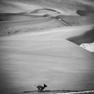 Emma on dunes