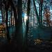 mystical november forest
