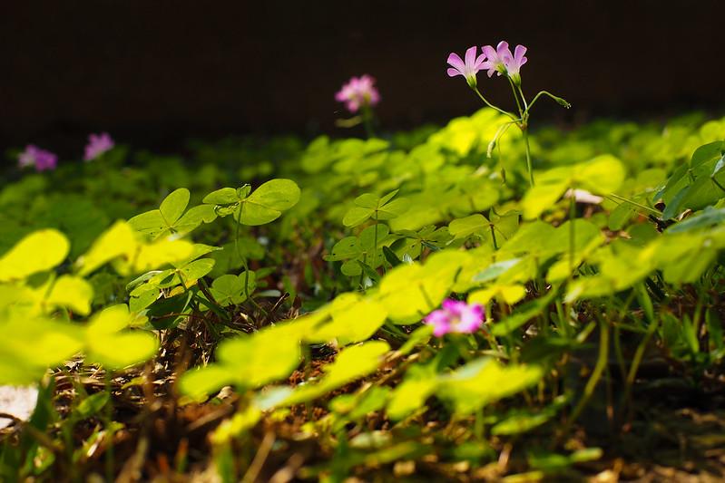 小花|Chiayi Park