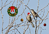 Holiday Mockingbirds