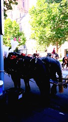 Horses, Melbourne Christmas