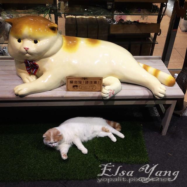 cat照片09