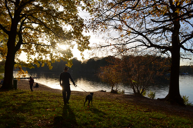 Jungfernheide Forst Berlin_ walking Bailey dog at Tegeler See lake during late autumn sun setting