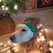20141207_140719 Sandy with elf hat by bermudafan8