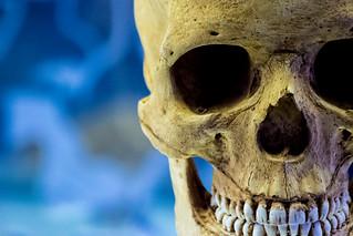 Image of Sterkfontein near Mogale City. southafrica skeleton skull bones gauteng hominoid sterkfontein cradleofmankind sterkfonteindma