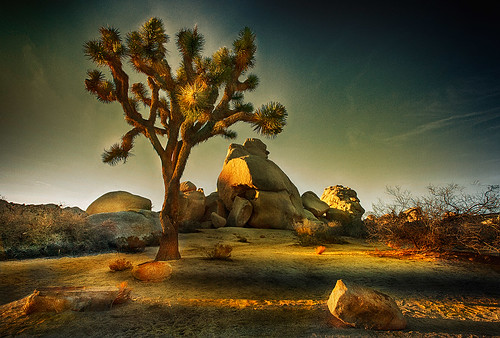 california mountains landscape rocks dusk boulders western moonlight southwestern joshuatreenationalpark