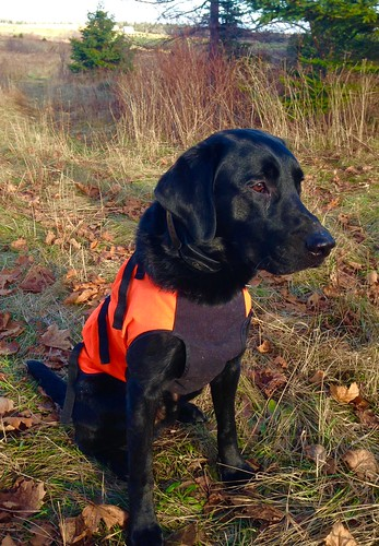 Pheasant hunt with Deke and the boys