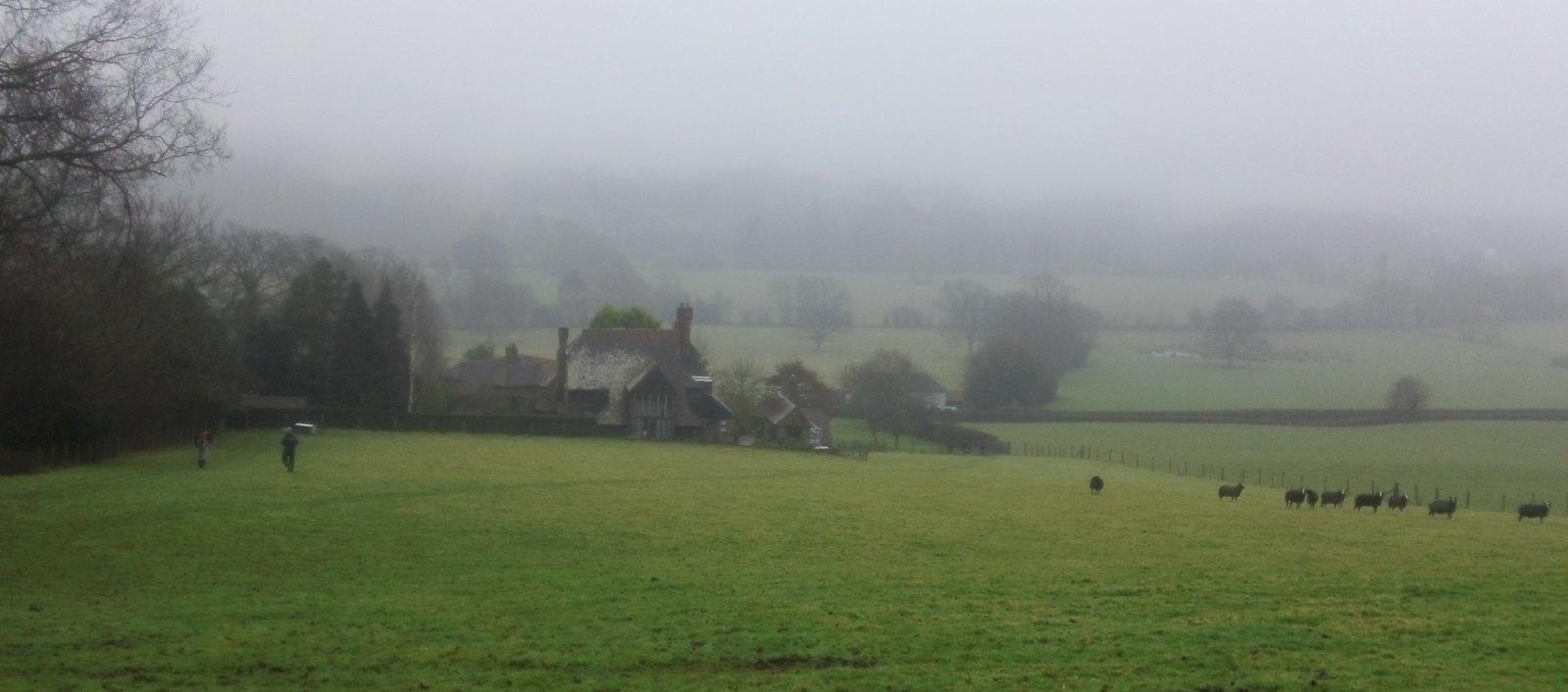 Black sheep see us coming! Farm near Fordcombe, Kent