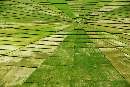 flores green field lines canon indonesia photography spider photo rice web spiderweb traveling van ricefield ricefields elvira t3i damme 600d 18135mm elviravandamme
