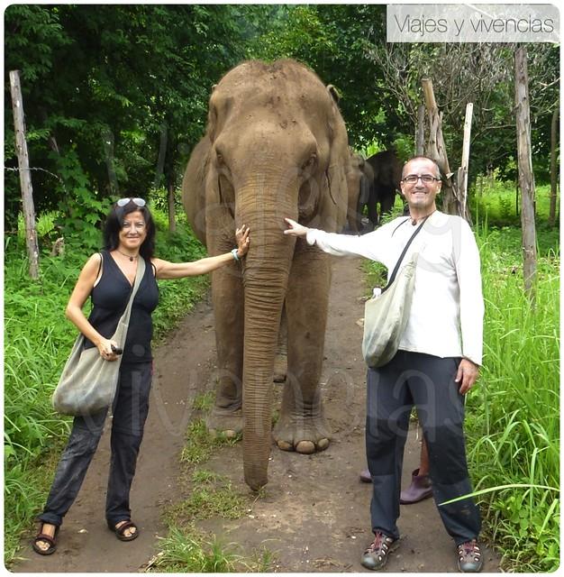 elefantes5