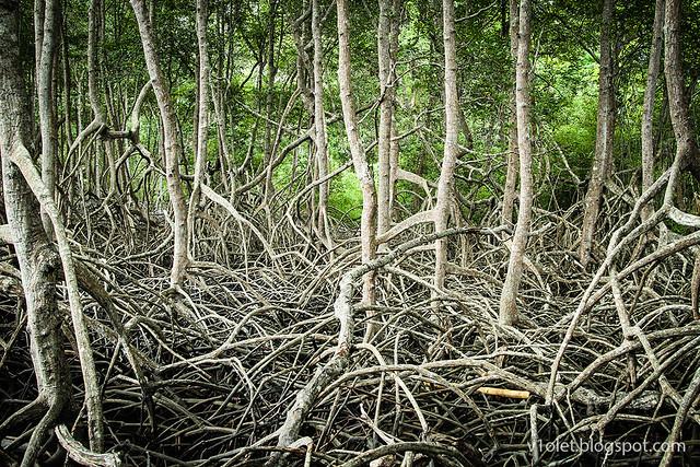 Mangrove3-8682rw