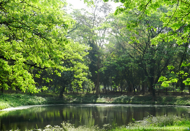 The trees look into the reflction in pond - Shibpur Botanical Garden