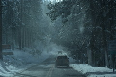 winter, snow, rain and snow mixed, frost, forest, morning, monochrome, darkness, winter storm, blizzard, freezing,