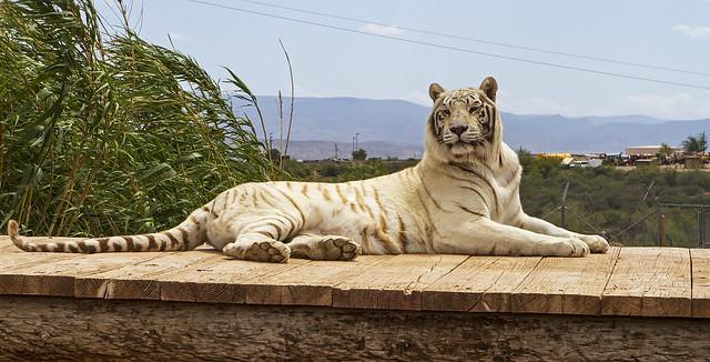 liger 158_7d1__250416