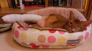 Sahara recovery from leg surgery