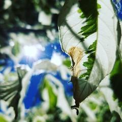 #plants #garden #nature #botanical  #botanicalgardens #albuquerque #abqbiopark