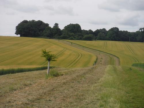 Towards Park Farm, Michelmersh