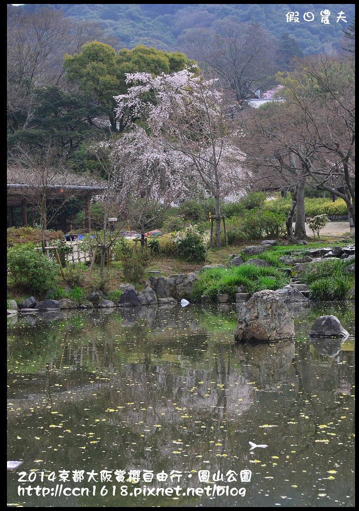2014京都大阪賞櫻自由行.圓山公園DSC_9949