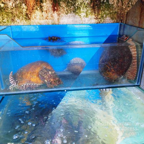 seafood tank
