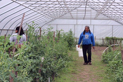 Sherri Barnes, left, at D-Town Farm, harvest fresh vegetables from their high tunnel to sell at Wayne State University's Market Day. At right, Kwamena Mensa her father before the market day begins to sell their fresh local produce.