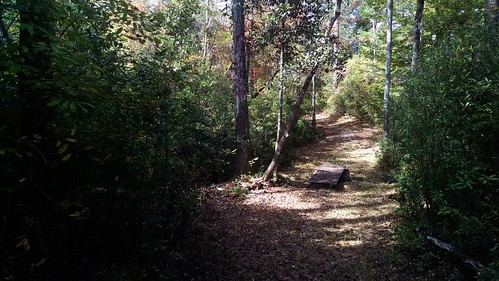 bridge forest hiking ms desoto 2014 backpakcing blackcreektrail