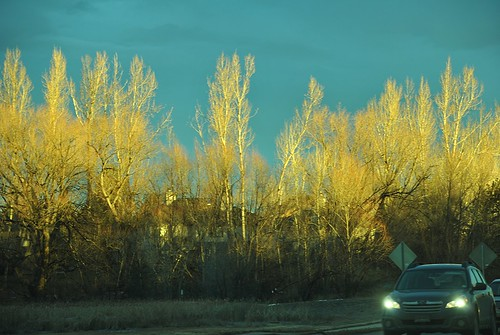 trees winter sunrise colorado shadows boulder co