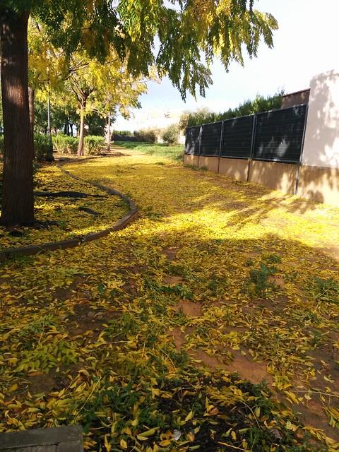 El parque en noviembre, tras una lluvia bien potente