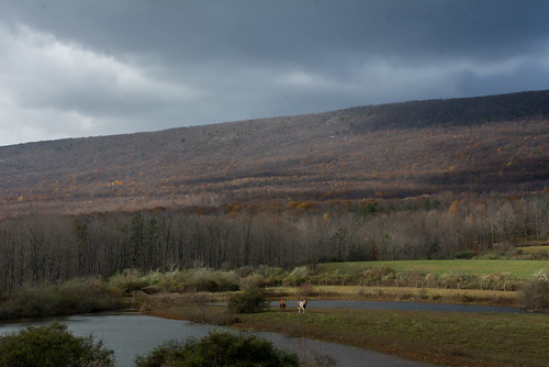 storm mountain pasture clouds flurries horse horses pond pennsylvania millmont millmontpennsylvania unioncounty bonniecoatesott