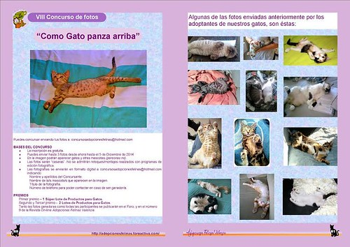 """8º Concurso fotográfico: """"Como gato panza arriba"""" 15757558531_d282e981b5"""