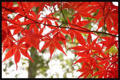 日本京都[左京]-南禪寺.23