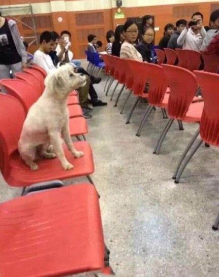 学霸狗在听课