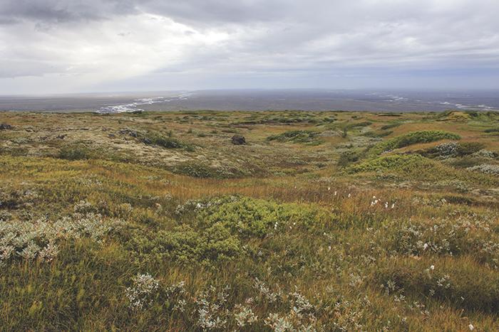 Iceland_Spiegeleule_August2014 074