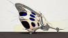 Philstar 2112 Galactic Cruiser 300GX res