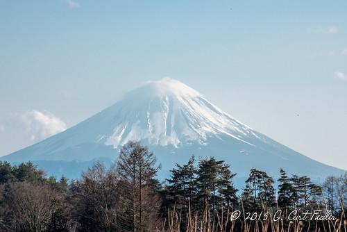 Fuji from Vineyard