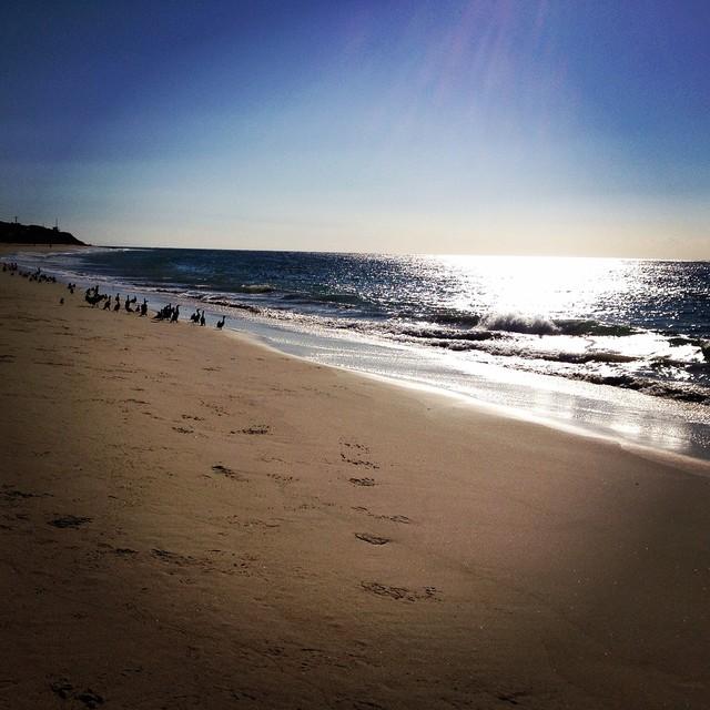 #beach #hiking #cormorants #newyearsday