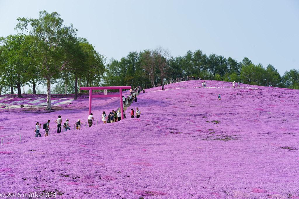 東藻琴芝桜公園-20