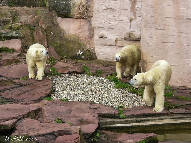 038-20071004-Felix ,Vera&Vilma32