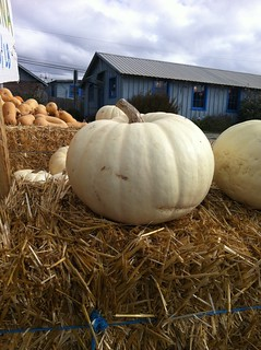 Pumpkins and squash at the farm stand