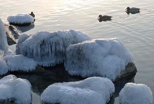 sunset sun lake canada bird ice water rocks britishcolumbia okanagan ducks h2o panasonic mallard icy waterfowl penticton solid okanaganlake lx5 nigeldawson dmclx5 jasbond007 copyrightnigeldawson2014