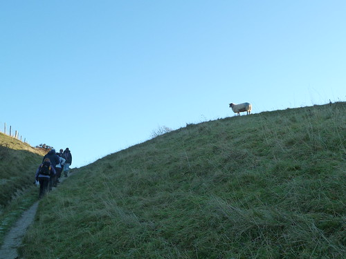 Sheep Looks On (Berwick to Birling Gap)